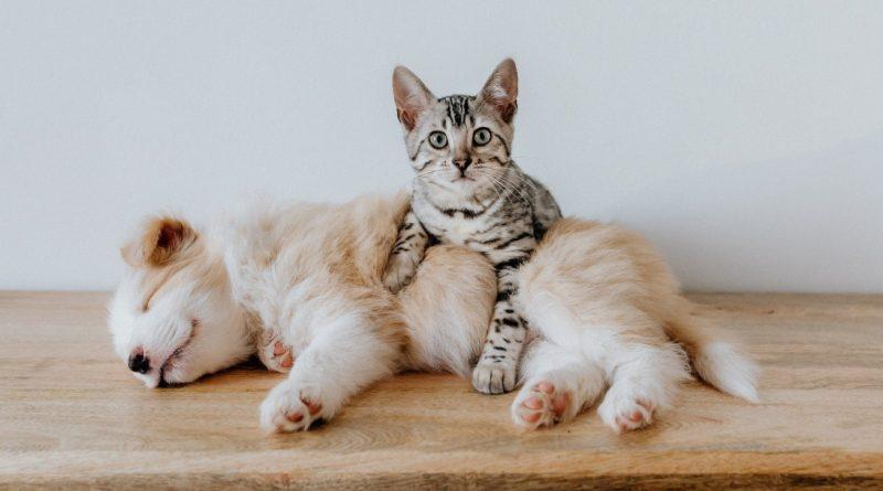 5 trucos para tomar las mejores fotos a tus mascotas