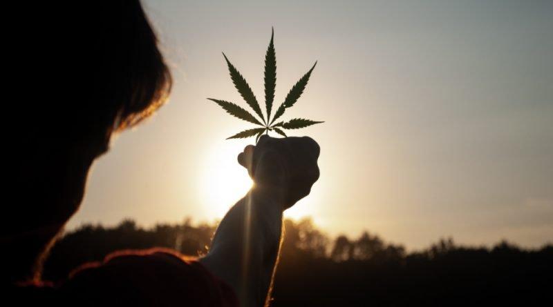 SCJN aprueba uso de cannabis con fines lúdicos